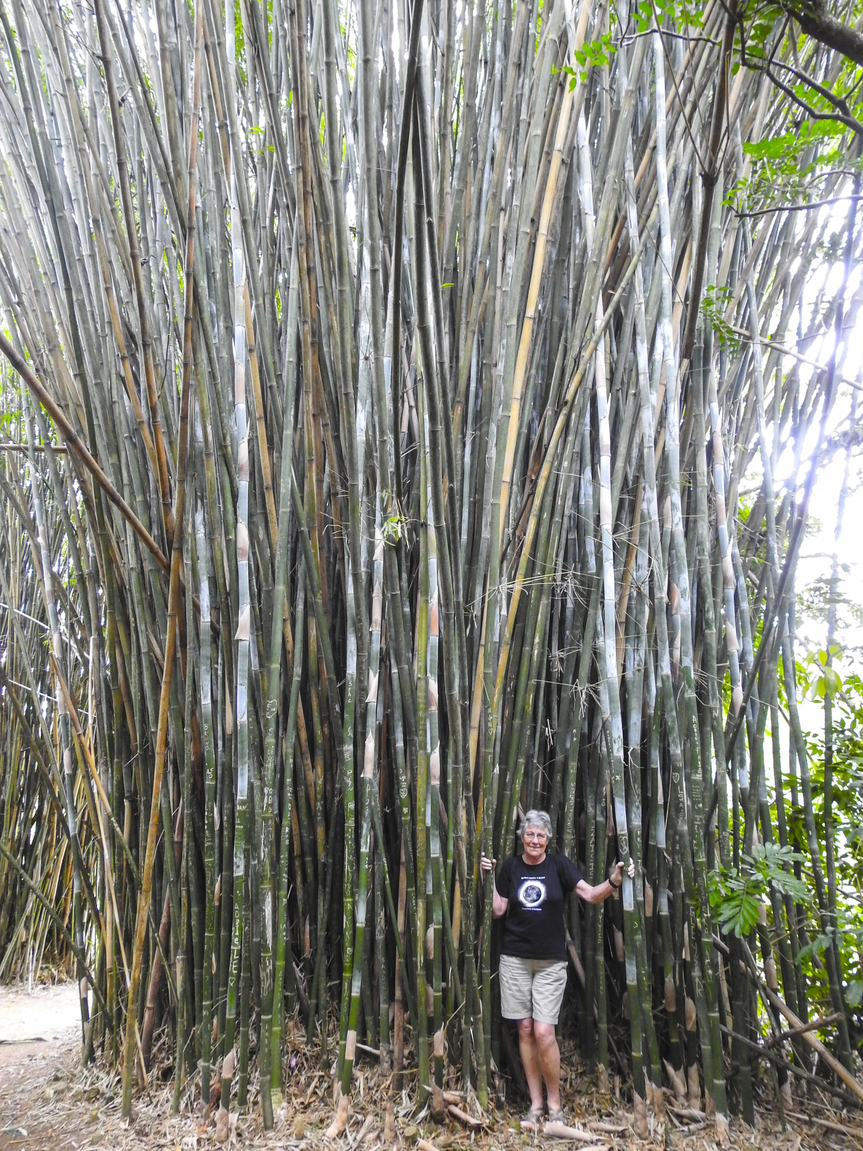 18-helle-i-bambus